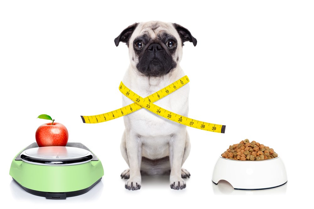 Dog Food Weight Scale